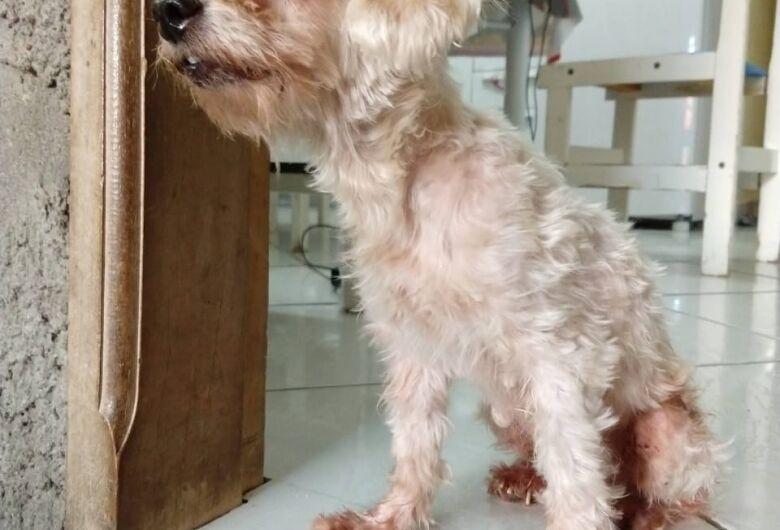 Homenagem da Funerais Pet a cachorrinha Chiara