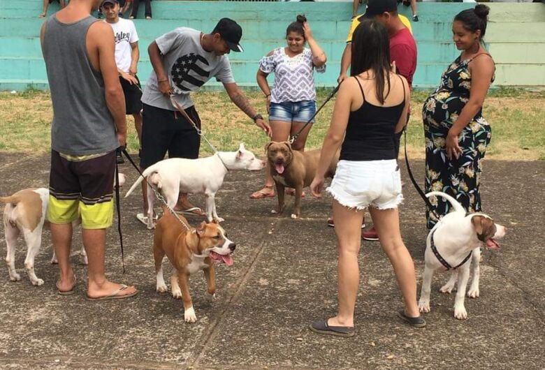 6º Encontro de Pit Bulls acontece neste domingo no Parque do Kartódromo