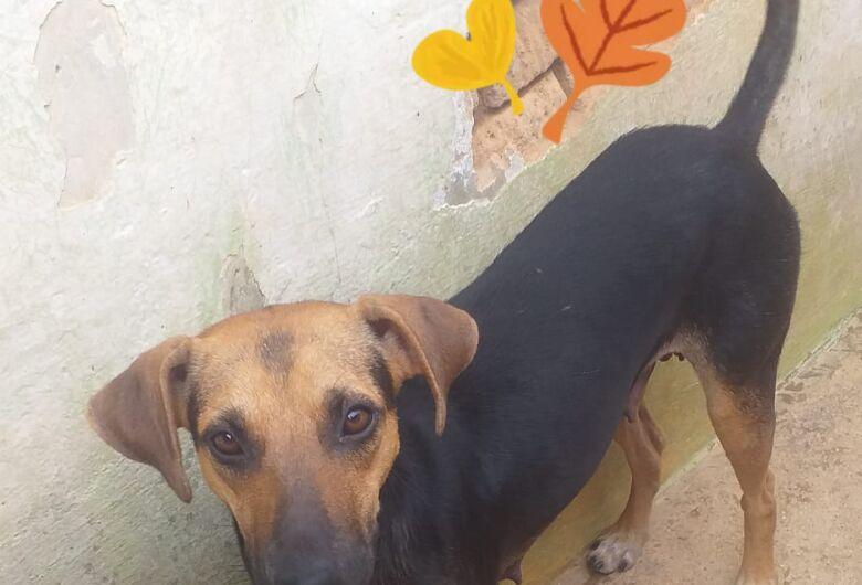 Homenagem Funerais Pet a cachorrinha Filó