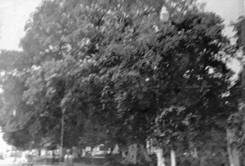 O dia em que a cidade se despediu de sua árvore mais querida