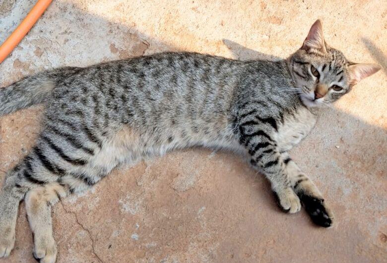 Homenagem Funerais Pet ao gatinho Docinho