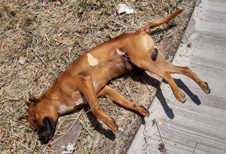 Cachorro é morto com requintes de crueldade no Jardim Zavaglia