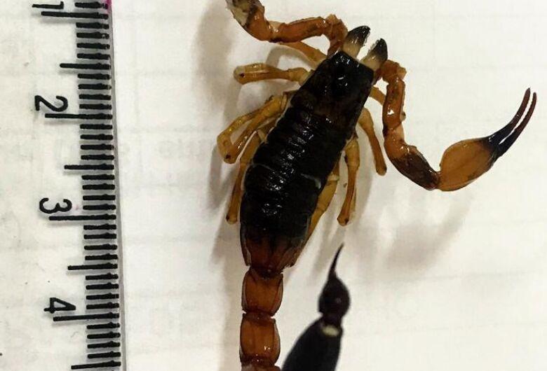 Zoonoses orienta sobre a prevenção a escorpiões