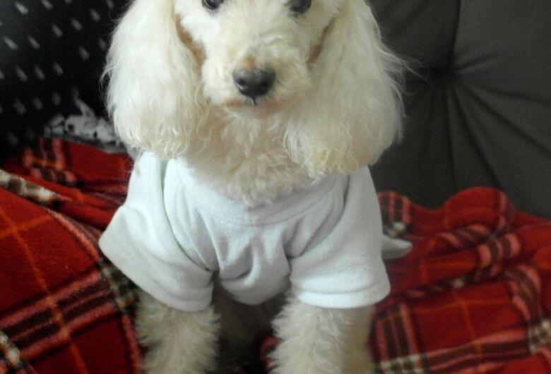 Homenagem da Funerais Pet a cachorrinha Belinha