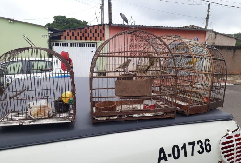 Polícia Ambiental encontra e liberta na natureza aves silvestres que eram mantidas em cativeiro e sob maus tratos