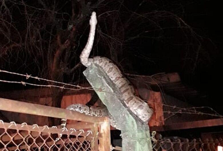 Cobra aparece em escola no Jardim São Rafael