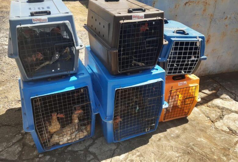 Prefeitura realiza resgate de animais no bairro Santa Angelina