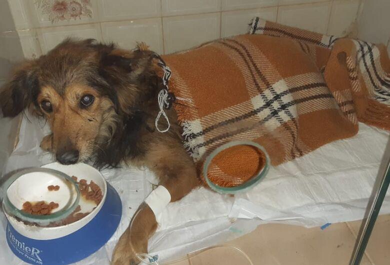 Homenagem da Funerais Pet ao cachorrinho Pererê