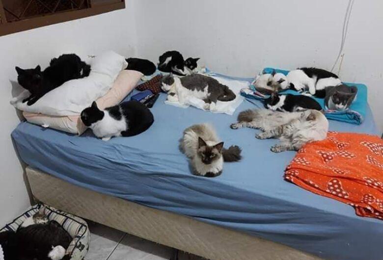 """""""Pizaiada Beneficente"""" irá ajudar abrigo de gatos em São Carlos"""