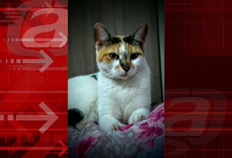 Homenagem Funerais Pet a gatinha Cindy