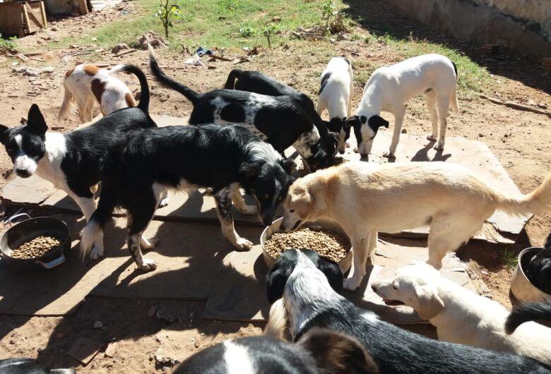Protetora de animais pede ajuda e São Carlos Agora faz campanha solidária