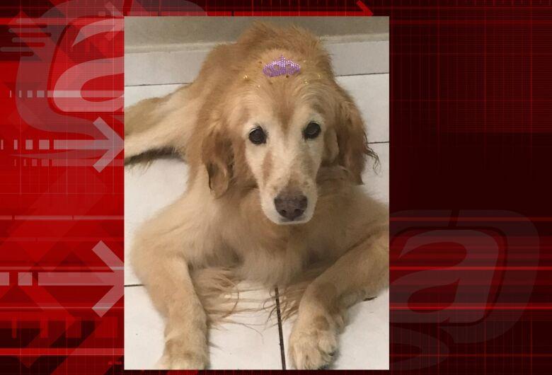 Homenagem da Funerais Pet a cachorrinha Holly