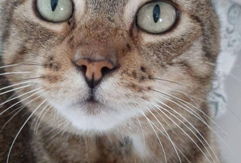 Homenagem Funerais Pet a gatinha Mimi