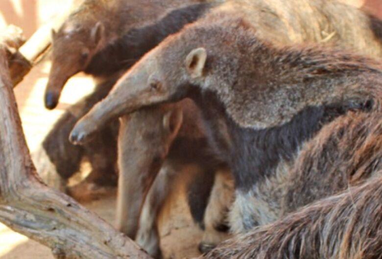 Parque Ecológico tem novo morador em plena pandemia