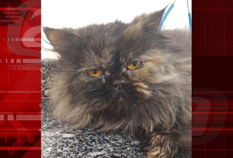 Homenagem da Funerais Pet a gatinha Mia