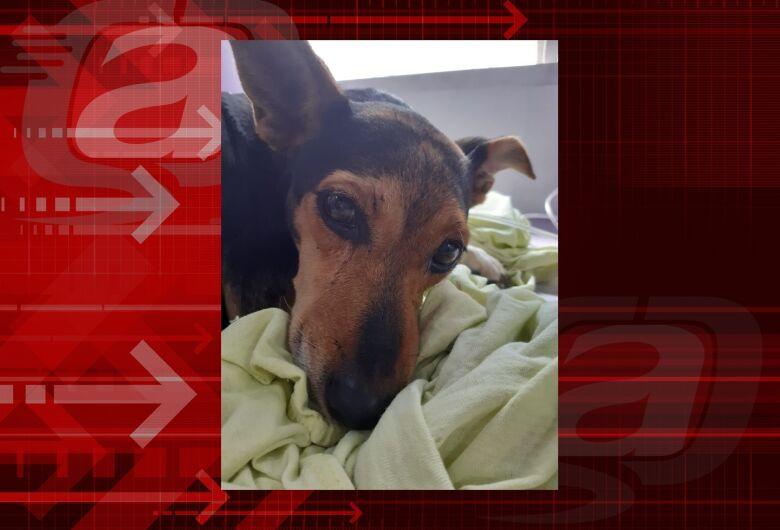 Homenagem da Funerais Pet a cachorrinha Nega