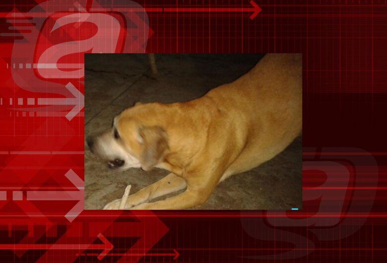 Homenagem da Funerais Pet ao cachorrinho Brad Pitt