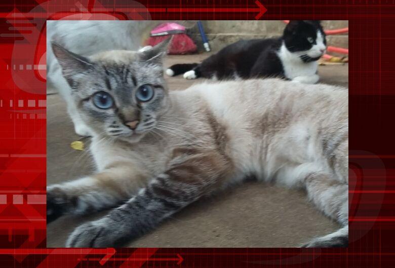 Homenagem da Funerais Pet a gatinha Sofy