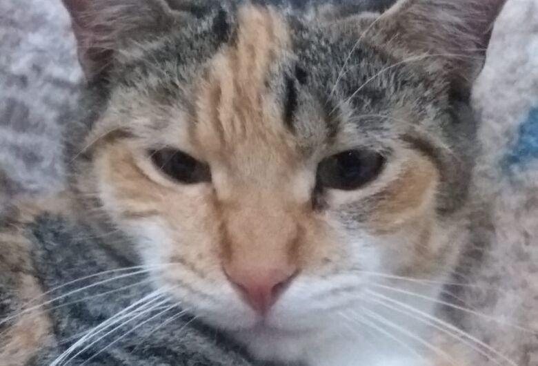 Procura-se a gatinha Titica que desapareceu no Jockey Clube