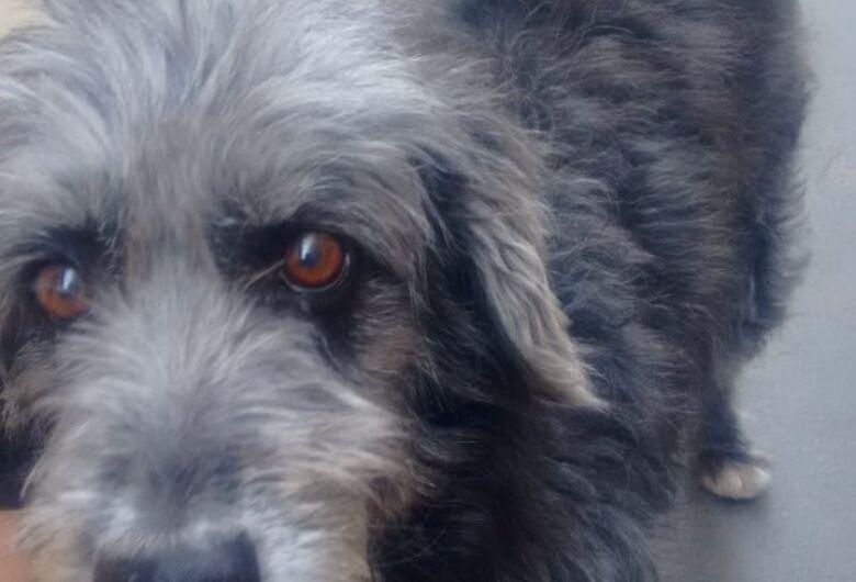 Homenagem da Funerais Pet à cachorrinha Luana