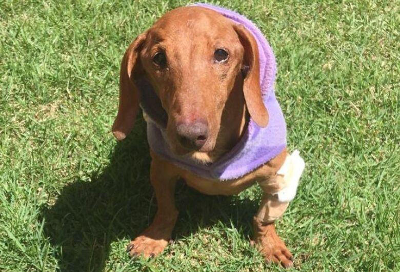 Homenagem da Funerais Pet ao cachorrinho Billy
