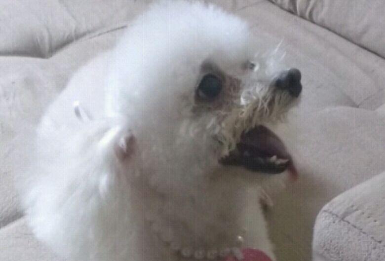 Homenagem da Funerais Pet a cachorrinha Maria