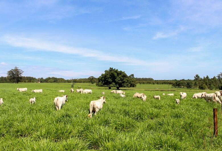 """Embrapa São Carlos faz """"passo a passo"""" para ajudar produtor a planejar produção de forragem e alimentação do rebanho"""