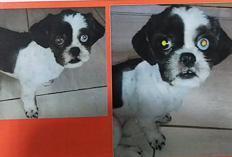 Cachorro é furtado de residência na Vila Monteiro