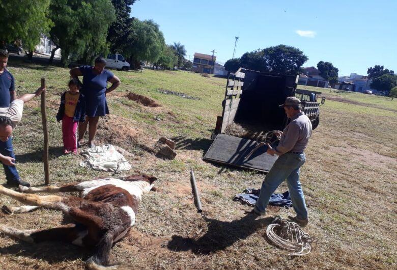 Cavalo é resgatado pelo Departamento de Defesa Animal no Santa Felícia