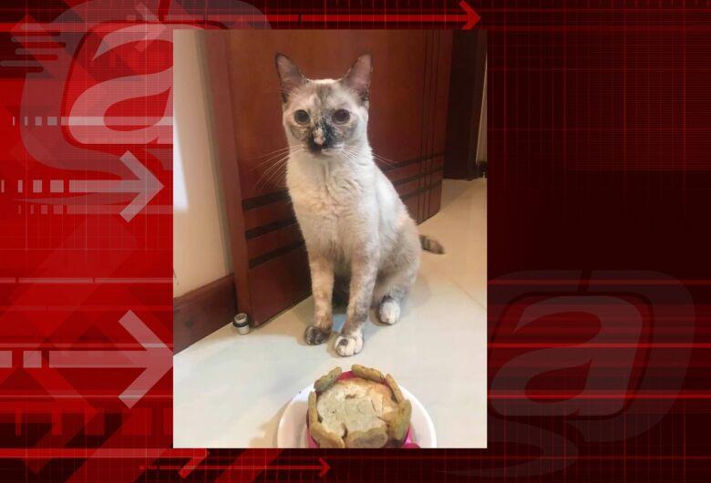 Procura-se gatinha Perola que desapareceu do Jardim Tangará