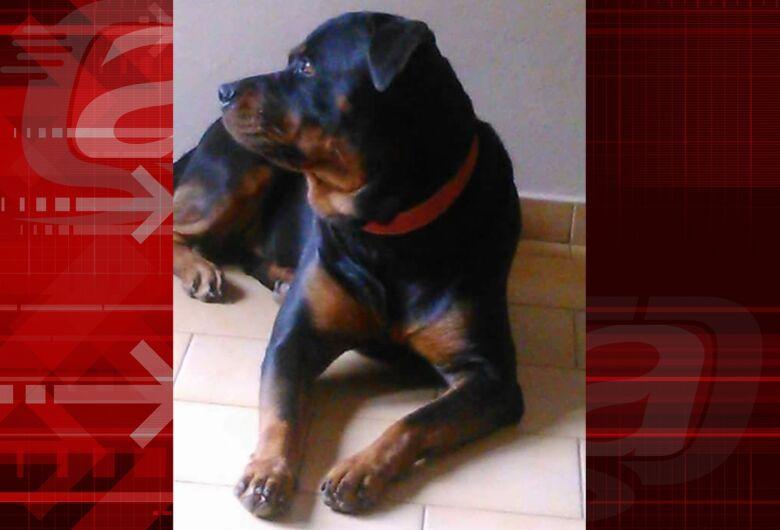 Homenagem da Funerais Pet a cachorrinha Loren