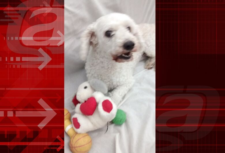 Homenagem da Funerais Pet ao cachorrinho Fluk