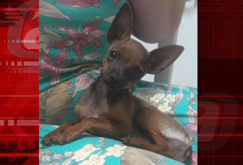 Procura-se cachorrinha Luna que desapareceu no São Carlos 8