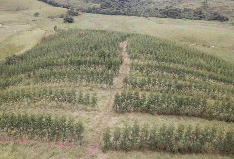 Embrapa São Carlos capacita técnicos e escolha da árvore deve considerar mercado