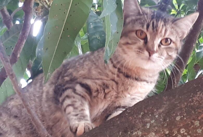 Homenagem da Funerais Pet à gata Belinha