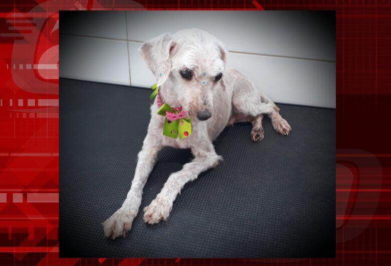 Homenagem da Funerais Pet a cachorrinha Nany