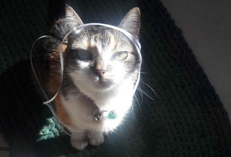 Homenagem da Funerais Pet à gatinha Brida