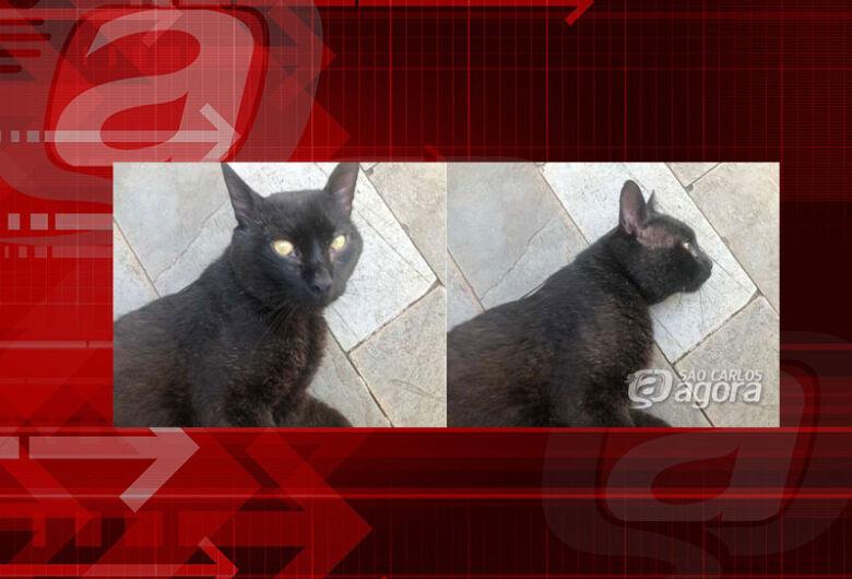 Gatinho Major desapareceu na região da Costa do Sol. Ajude a encontrá-lo.