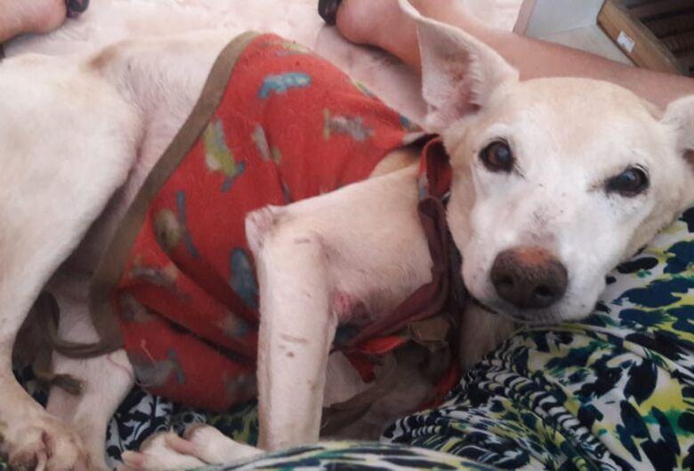 Homenagem da Funerais Pet ao cachorrinho Keyko