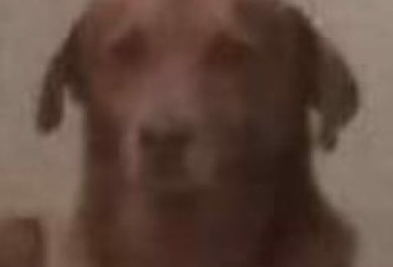 Homenagem da Funerais Pet ao cachorrinho Scoby