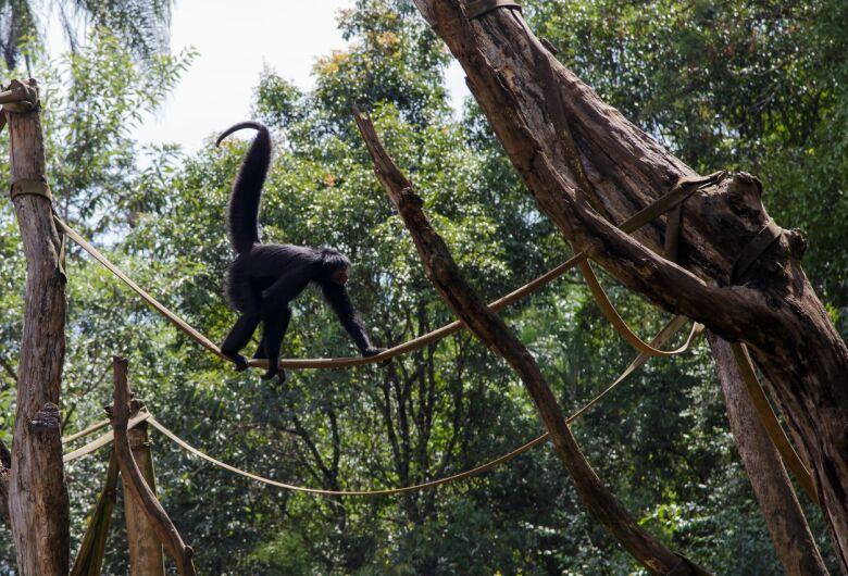 Parque Ecológico e outras instituições de conservação ambiental oferecem curso virtual