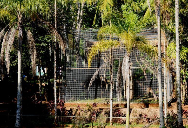 Parque Ecológico ganha novos recintos para macacos amazônicos