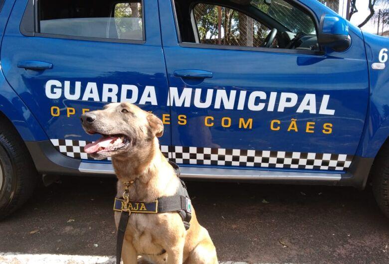 Canil da GM encontra drogas escondidas ao pé de uma árvore no São Carlos 5