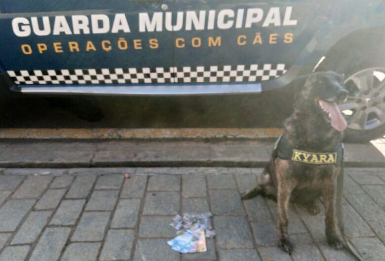 Cachorra da GM localiza entorpecentes escondidos no Romeu Tortorelli