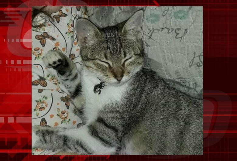 Gatinha Dora desapareceu na região do Monte Carlo. Ajude a encontrá-la.