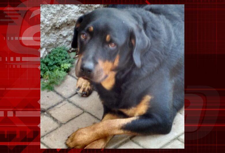 Homenagem da Funerais Pet a cachorrinha Safira