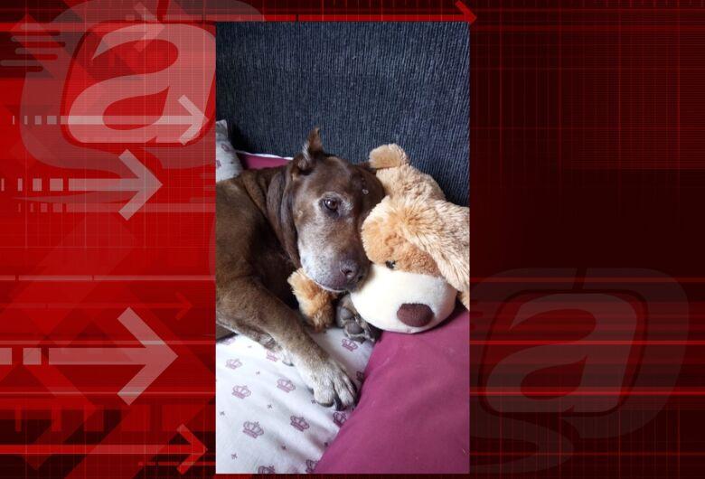Homenagem da Funerais Pet a cachorrinha Nina