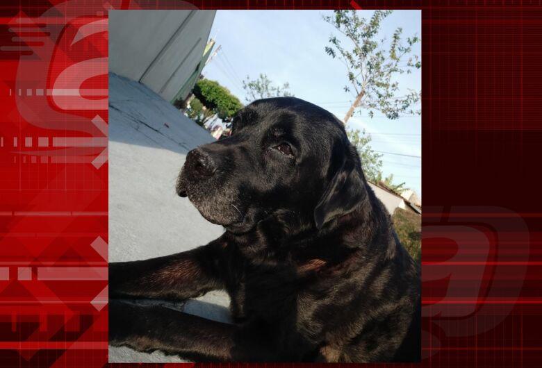 Homenagem da Funerais Pet ao cachorrinho Akeem