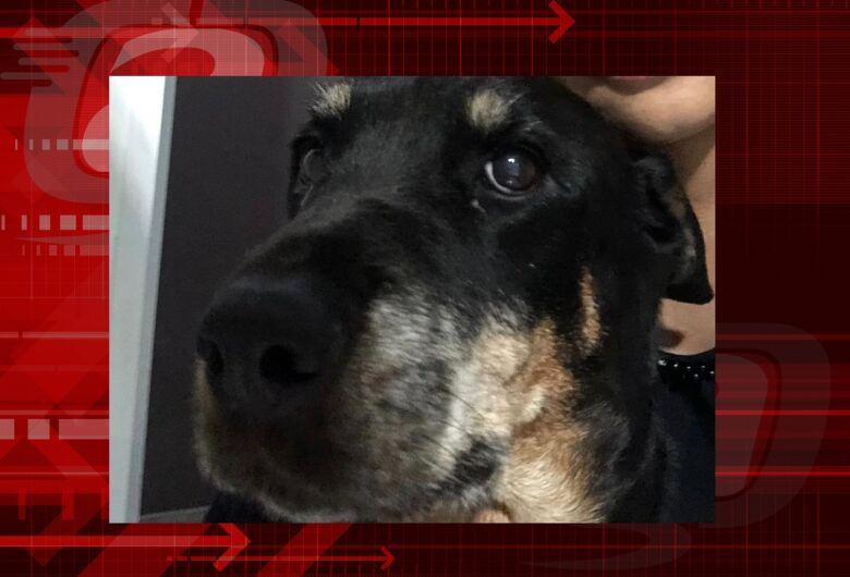 Homenagem da Funerais Pet a cachorrinha Luma