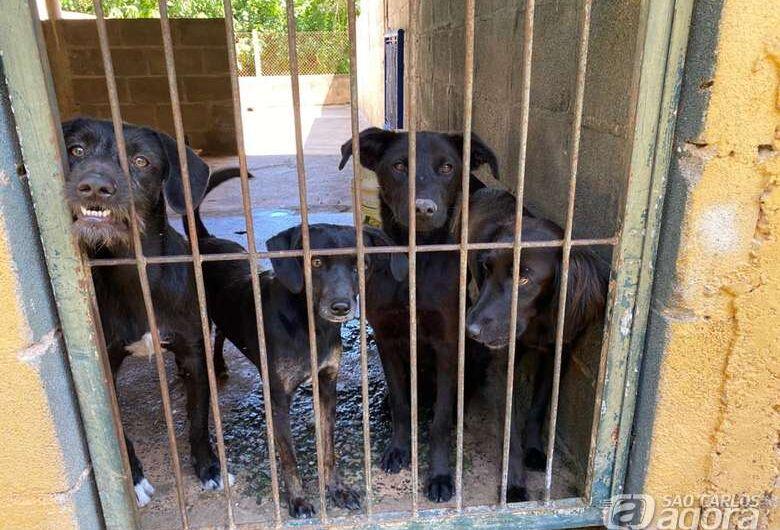 Projeto de lei exige que Prefeitura publique na internet resultado de denúncias de maus-tratos aos animais